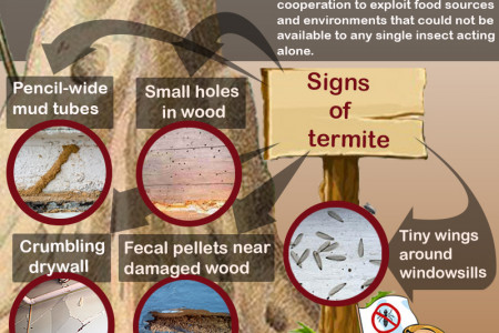 Briefly About Termites Infographic