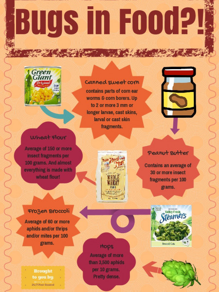 Bugs in Your Food?! Infographic