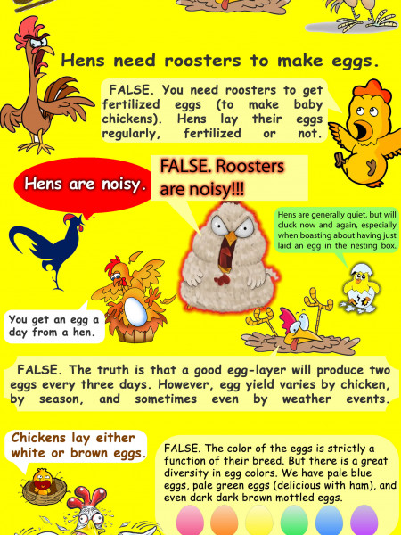 Busted Chicken Myths Infographic
