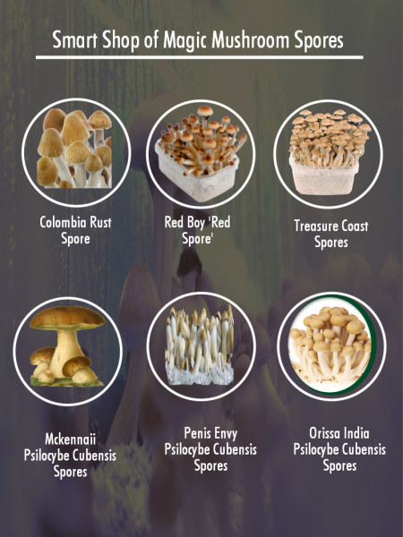 Buy Magic Mushroom Spores Online Infographic