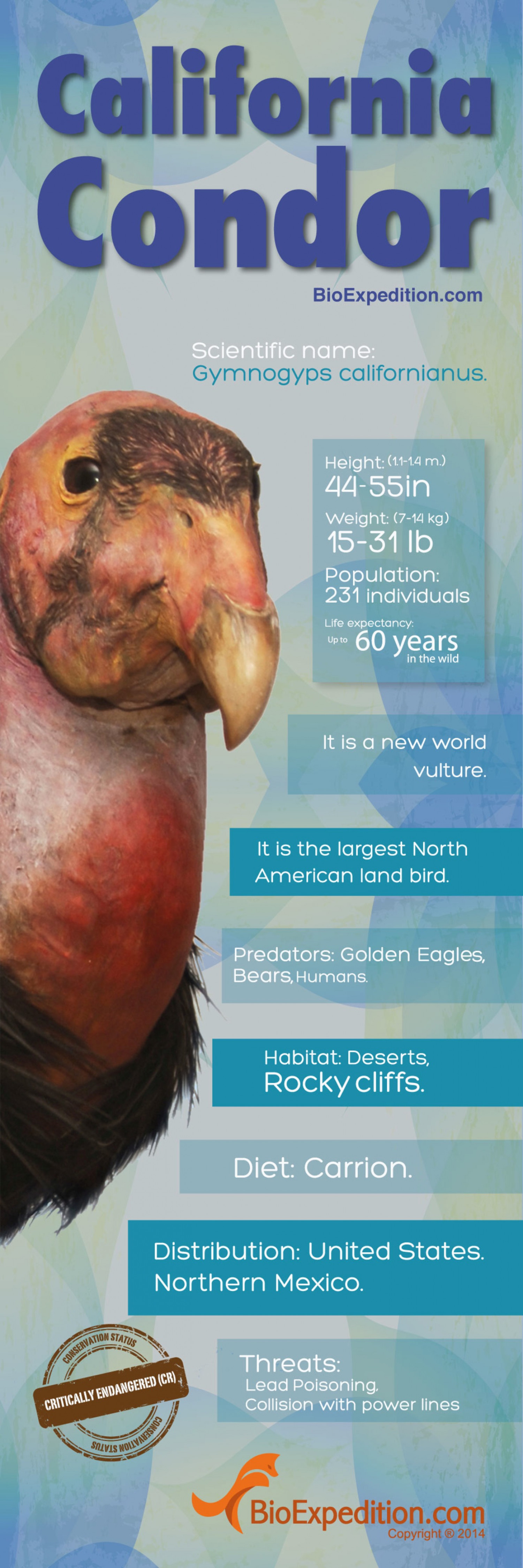 California Condor Infographic