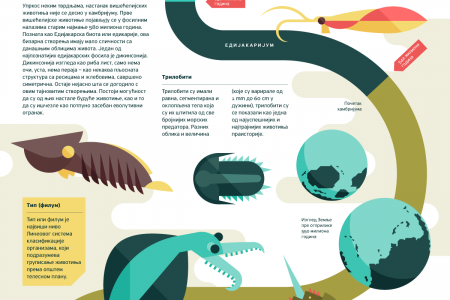 Cambrian Explosion Infographic