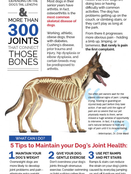 The Canine Body Infographic