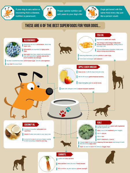 Canine Superfoods Infographic