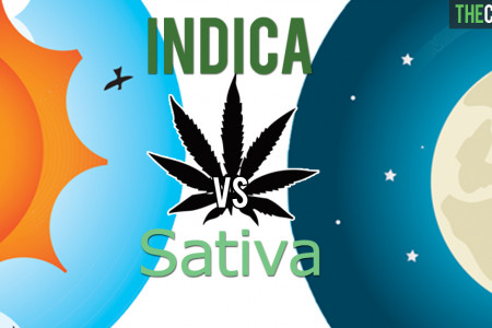 Cannabis Sativa vs Indica Infographic
