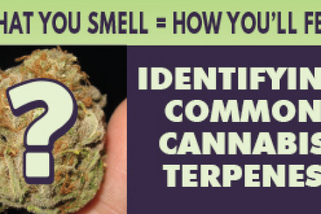 Cannabis Terpenes- What you smell is how you'll feel Infographic