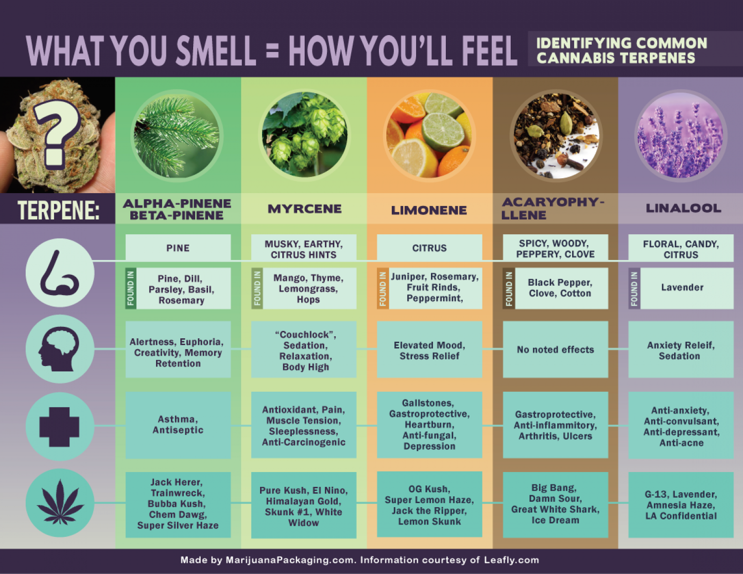 What you smell how you'll feel