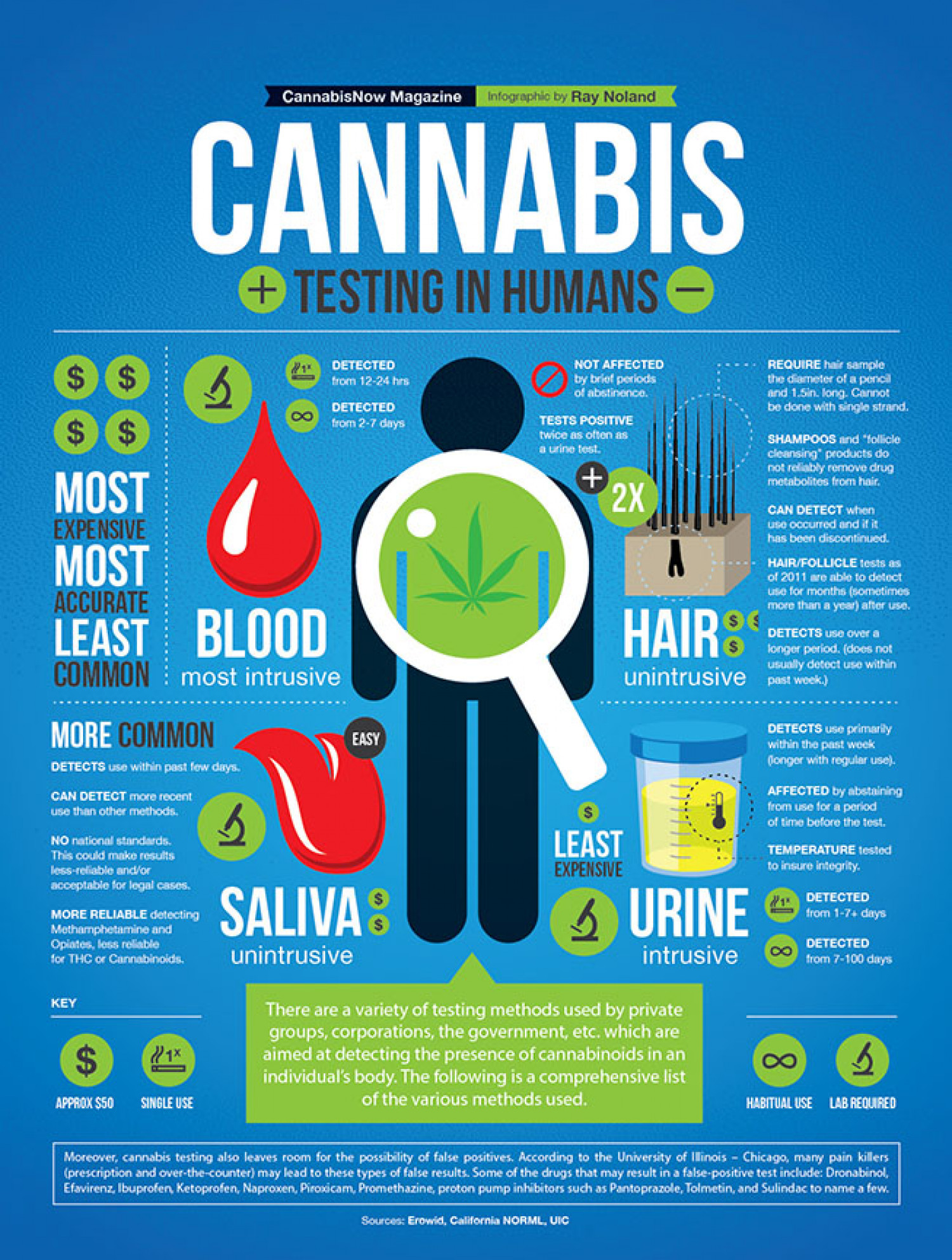 Cannabis Testing in Humans Infographic