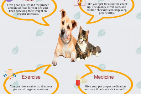 Care for pet with Disabilities Infographic