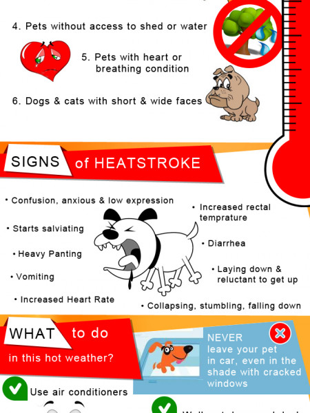 Care For Your Pets In Hot Weather Infographic