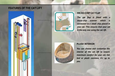 Cat Lift Infographic
