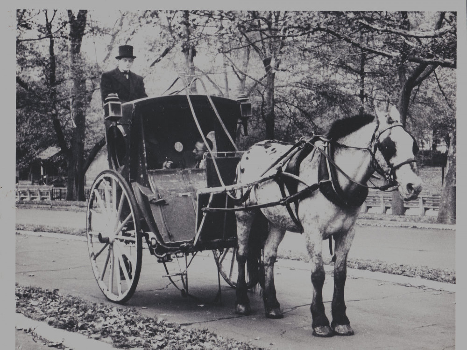 Central Park Horse and Carriage Rides Infographic