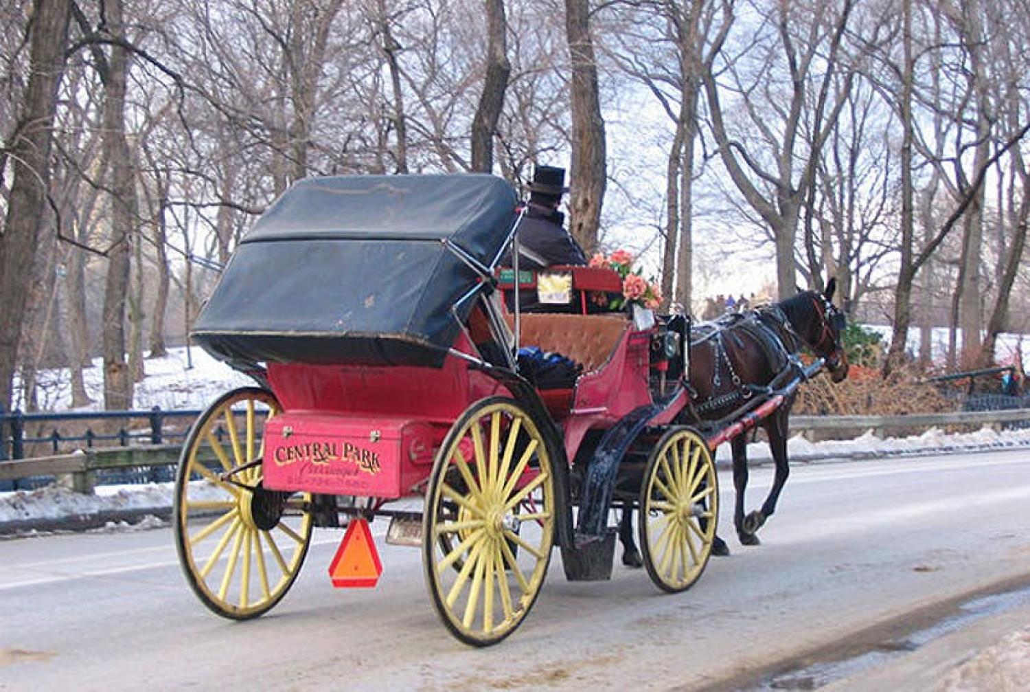 central park horse carriage rides Infographic