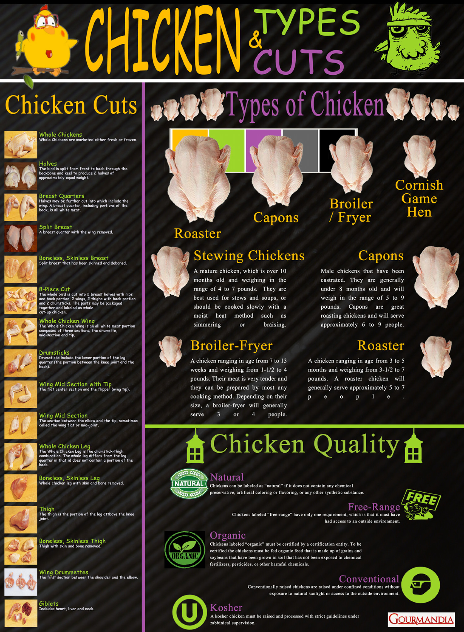 Chicken Types and Cuts Infographic