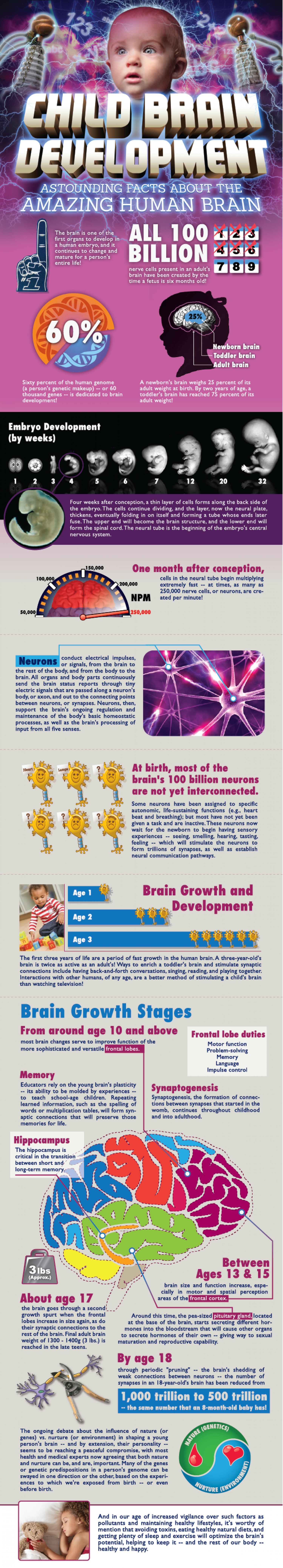 Child Brain Development  Infographic
