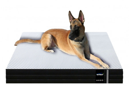 Choose The Best Comfortable Pet Mattress in India at Best Prices Infographic