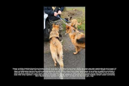 Coco, The Handover | Residential Training | Peter Hargreaves Dog Trainer Infographic