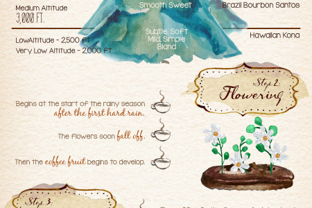 Coffee: From Seed to Cup Infographic
