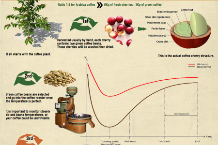 Coffee roasting process infographic Infographic