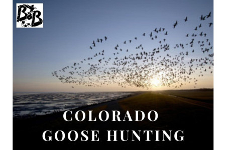 Colorado Goose Hunting Infographic