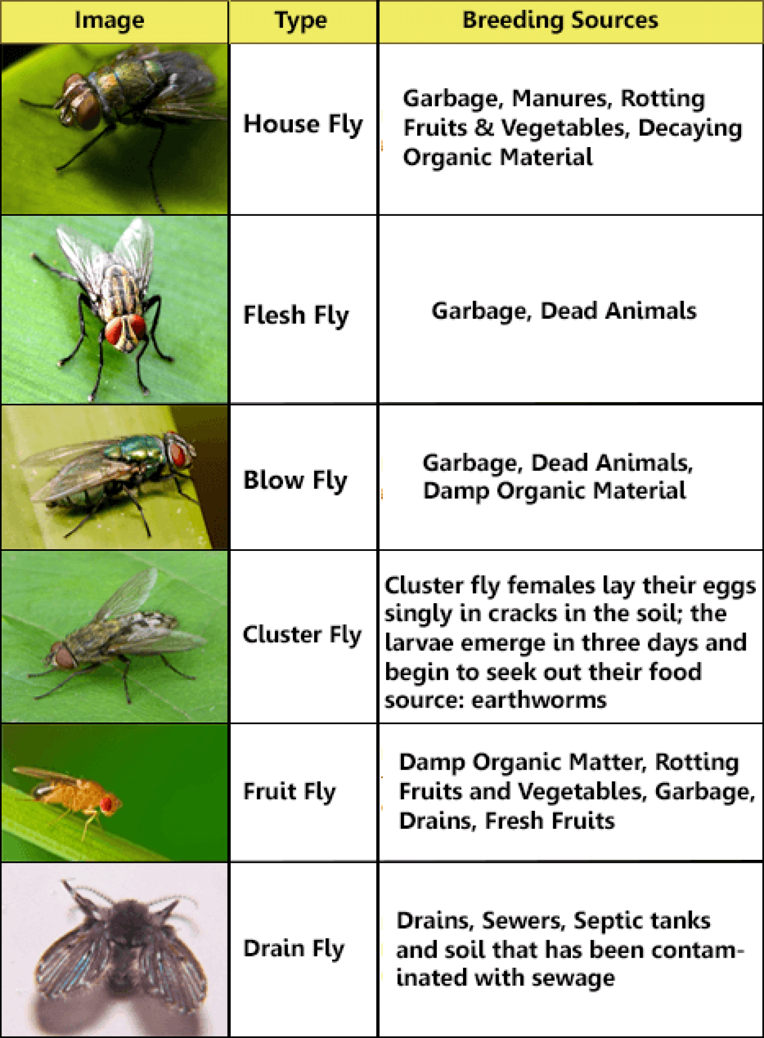 common fly identification chart