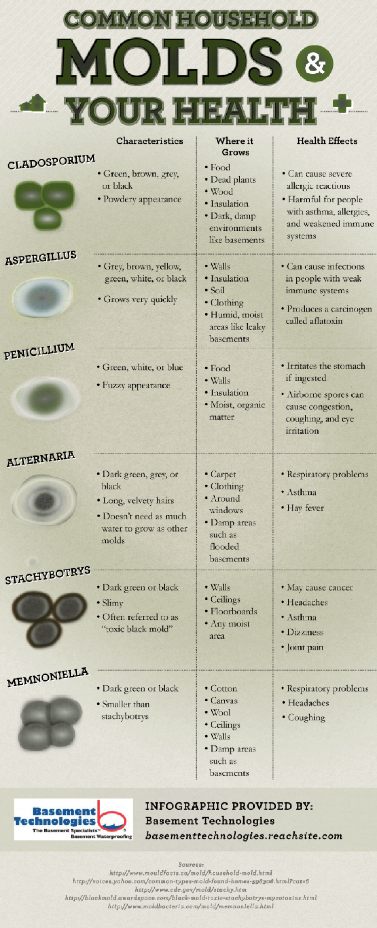 Common Household Molds and Your Health Infographic