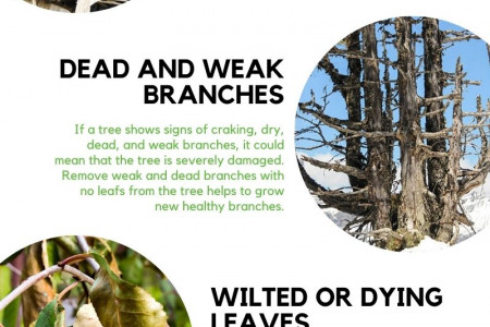 Common Signs Of Sick Tree Infographic