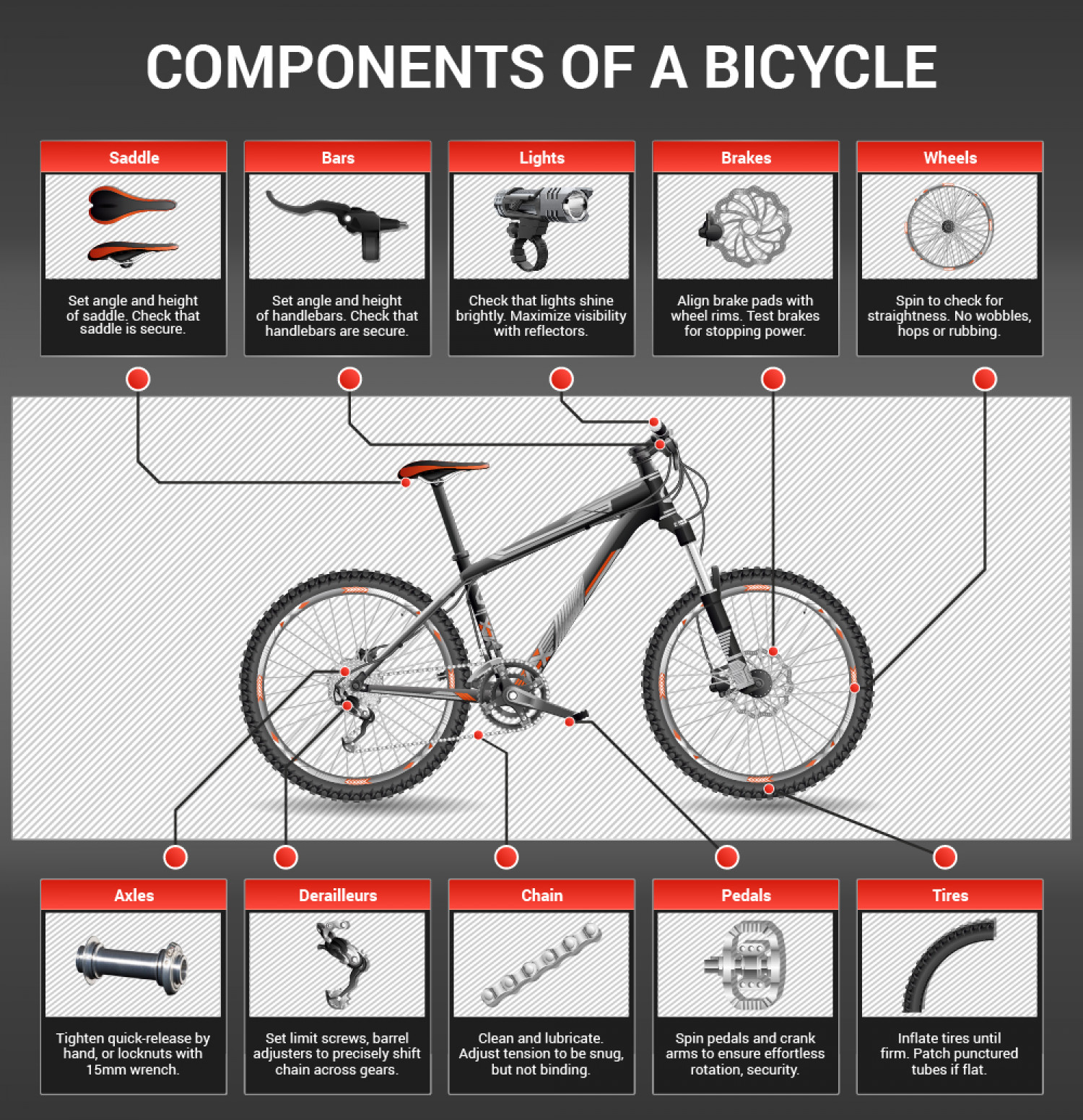 Components of a Bike Infographic
