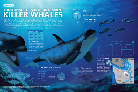 Conserving the Southern Resident Killer Whales Infographic