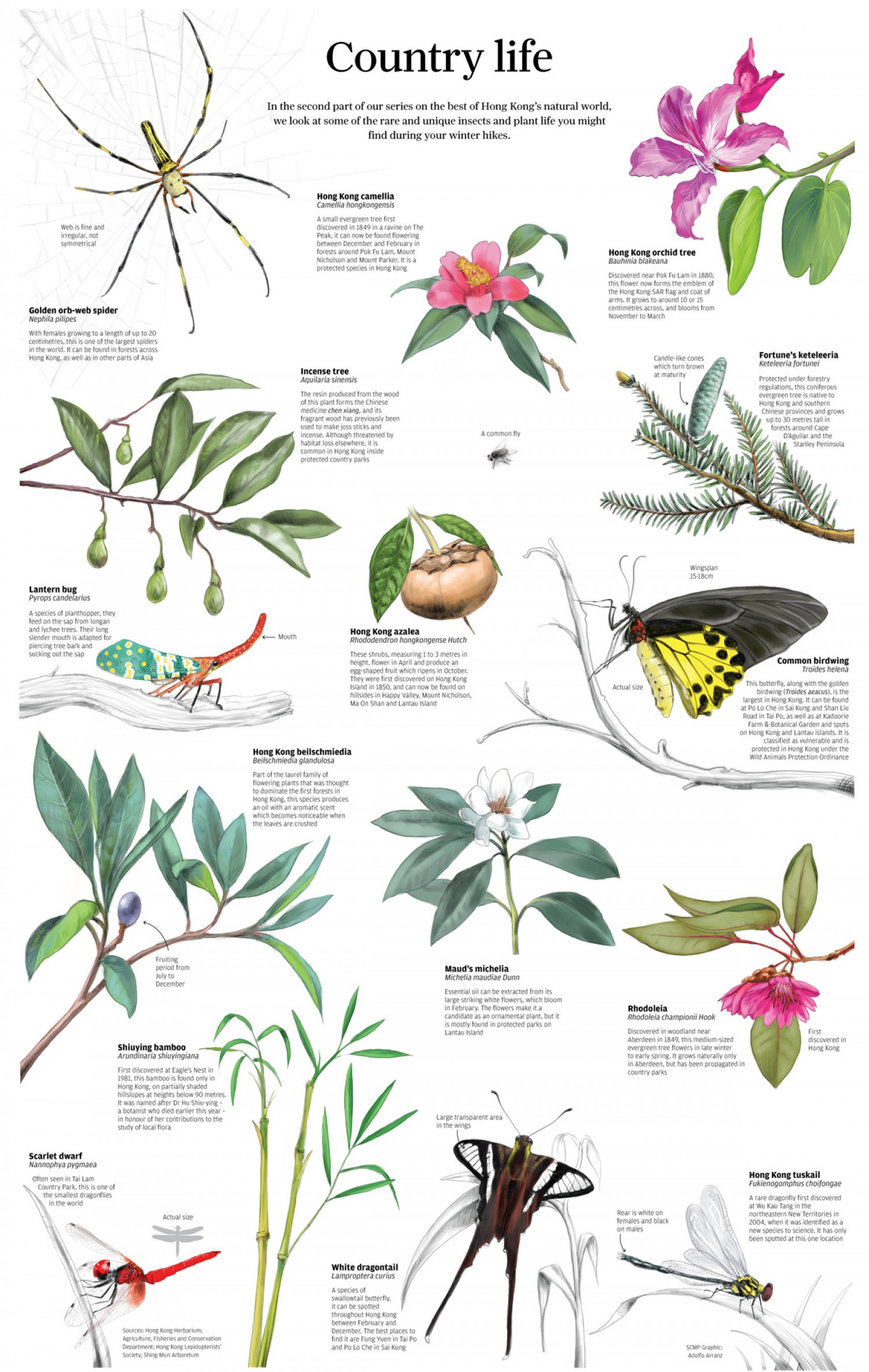 Country Life Infographic