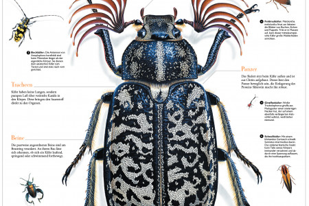 Crazy Bugs Infographic