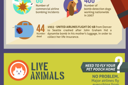 Crazy Secret Cargo: Guess What's Flying Under You?  Infographic