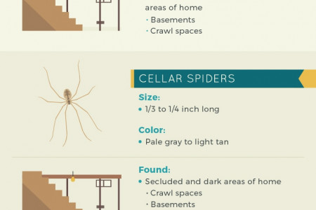 Creepy Crawlies: Common Household Spiders and Prevention Tips Infographic