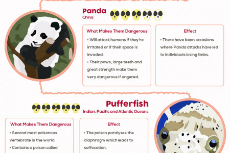 Cute but Deadly: The World's Most Surprisingly Dangerous Animals Infographic
