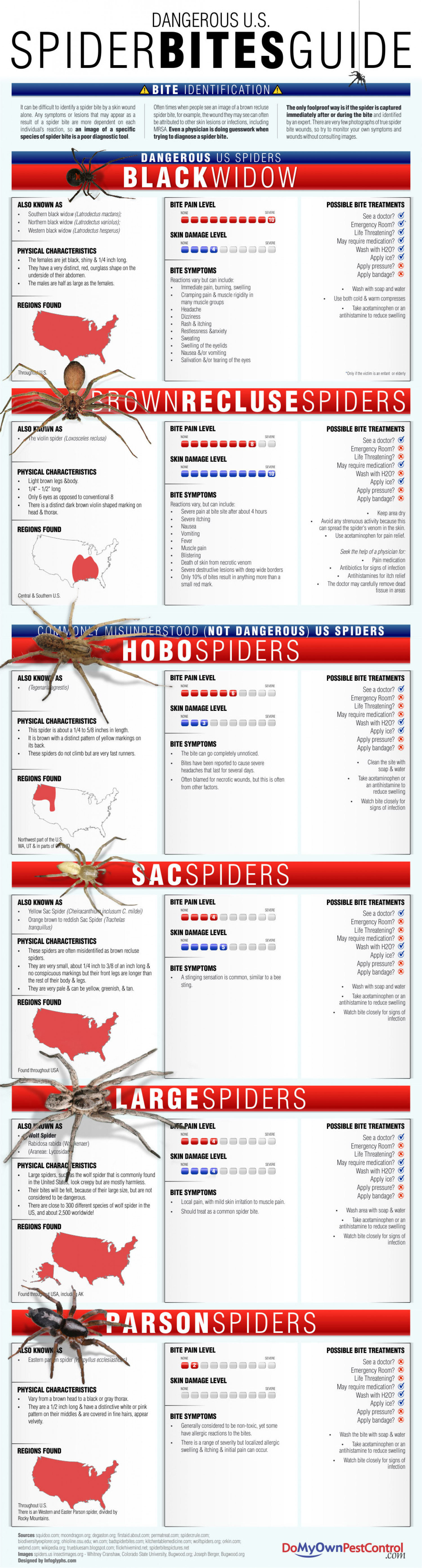 Dangerous U.S. Spider Bites Guide  Infographic