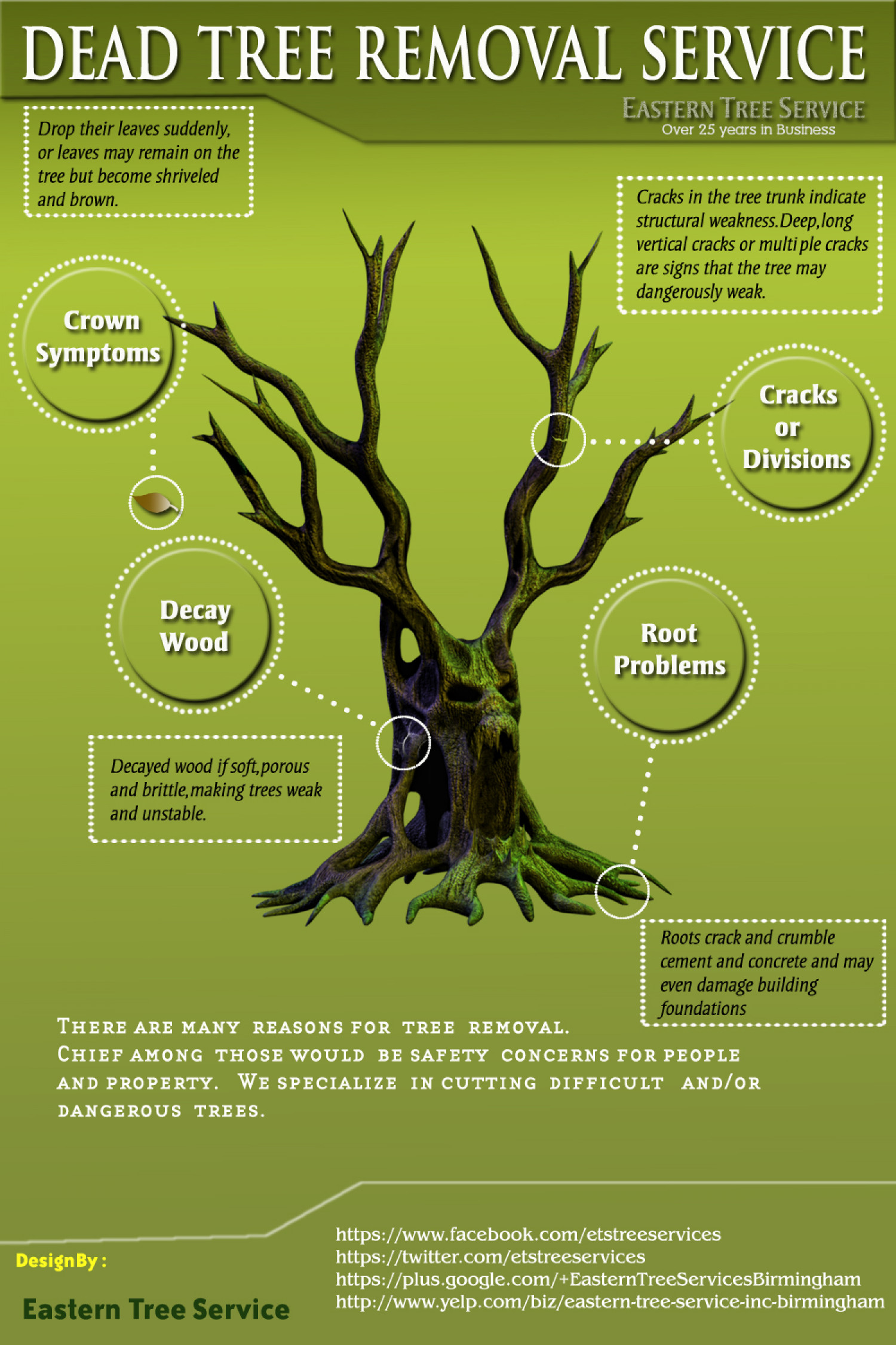 Dead tree removal service in Atlanta infographics