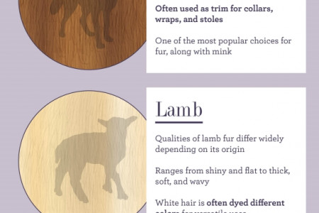 Deciphering Different Types of Furs  Infographic
