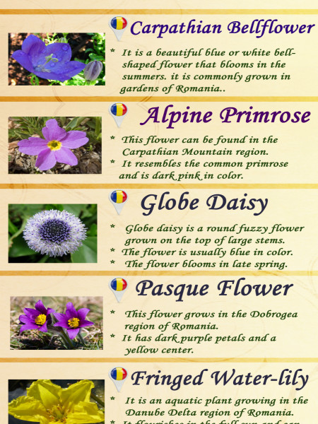 Different Eye Catching Flowers in Romania Infographic