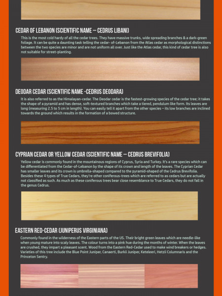 Different Types of Cedar Infographic Infographic
