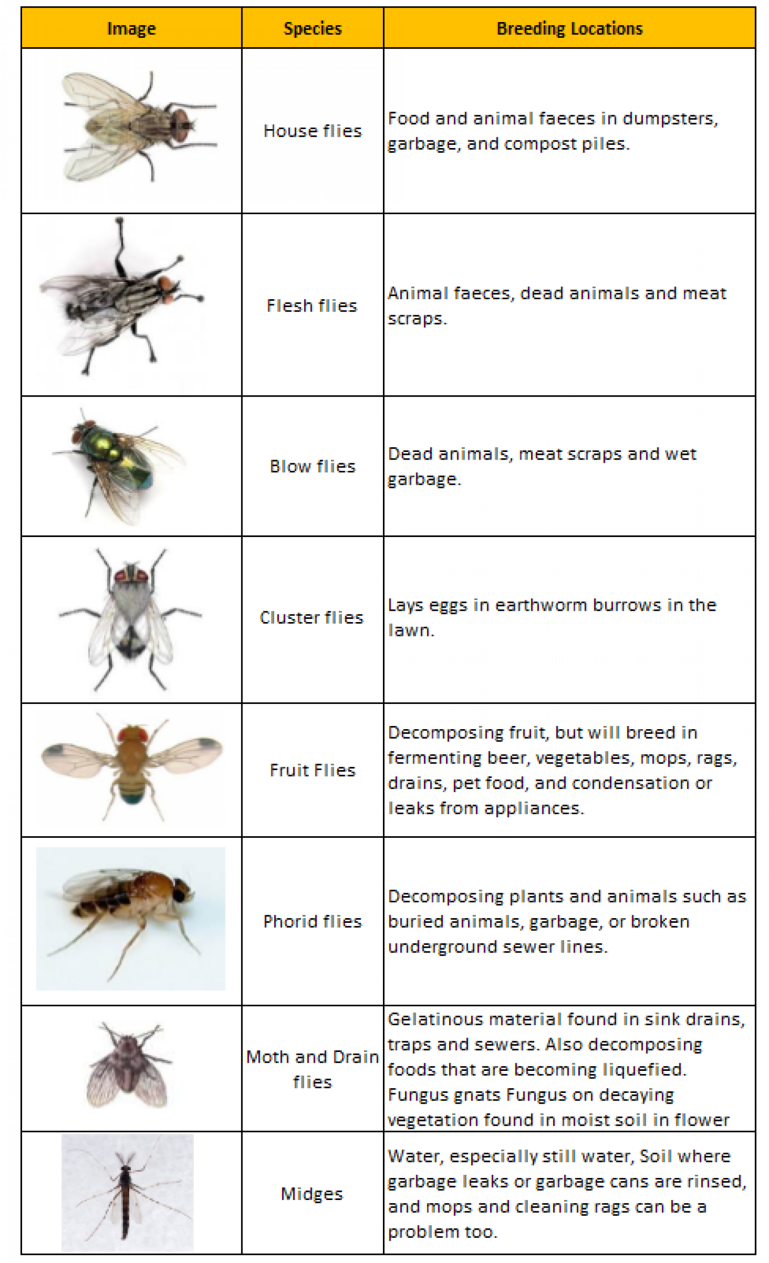 Different Types on Flies Commonly Found in Homes Infographic