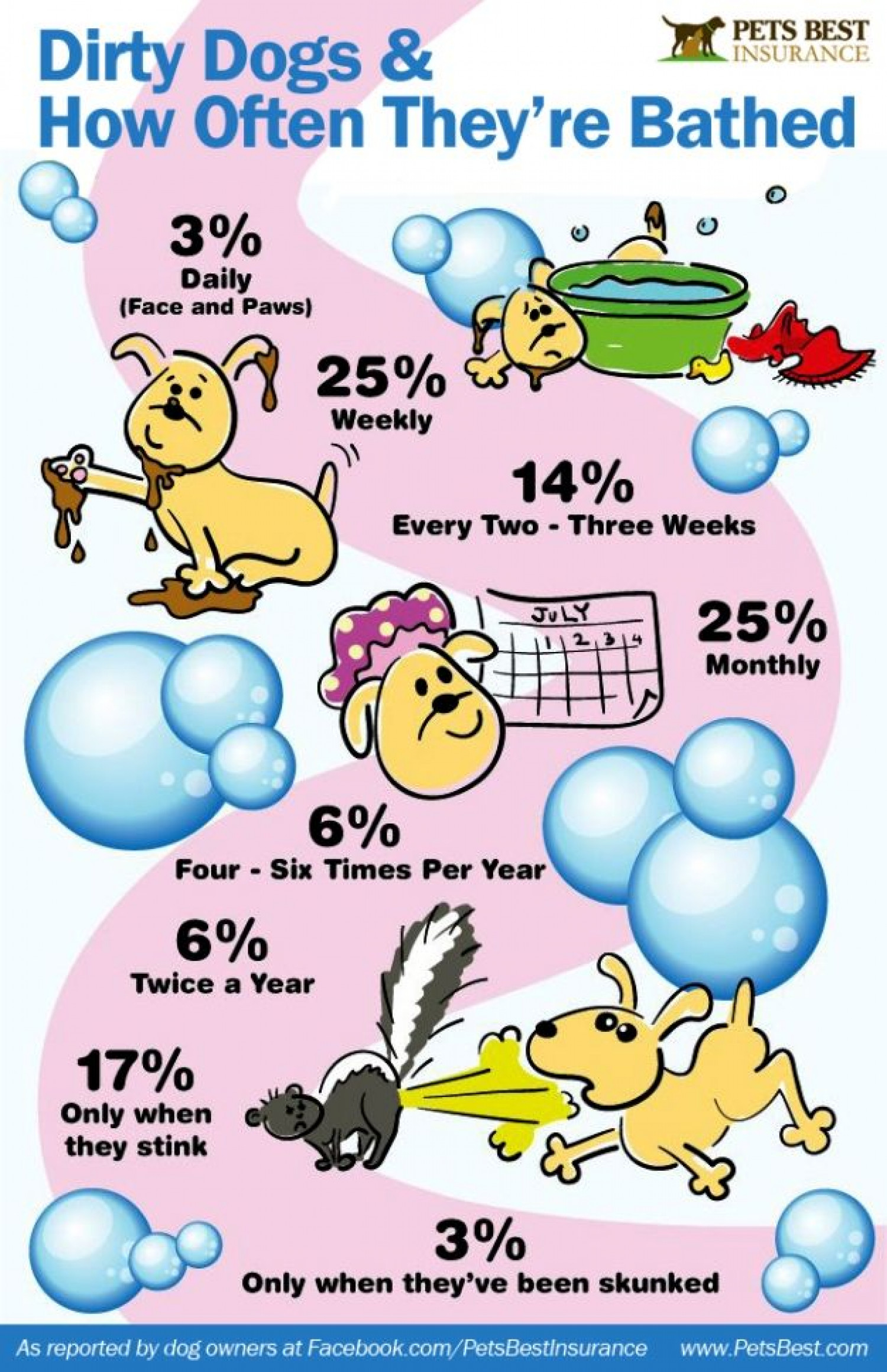 Dirty Dogs and How Often They're Bathed Infographic