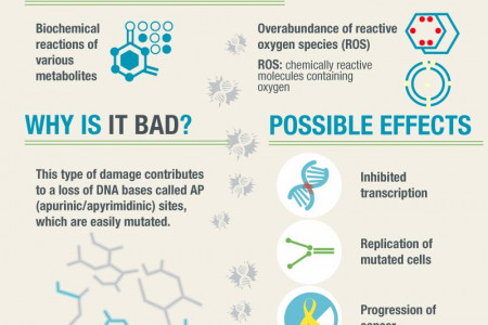 Discovering Damage Within Our DNA Infographic