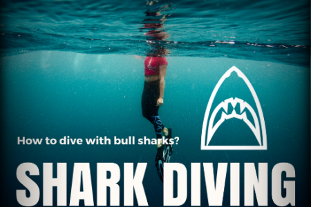 Diving with Bull Sharks Infographic