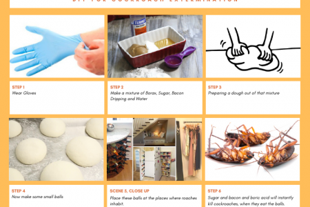 DIY For Cockroach Extermination Infographic