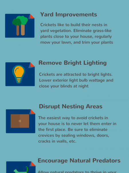 DIY: Ways to Prevent Crickets Infographic