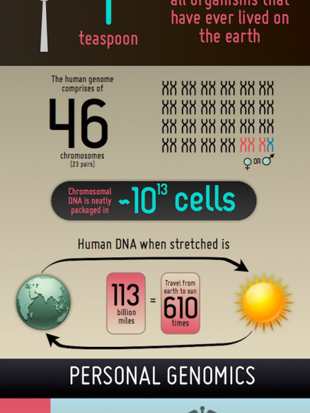 DNA, Human genome, Personal genomics Infographic