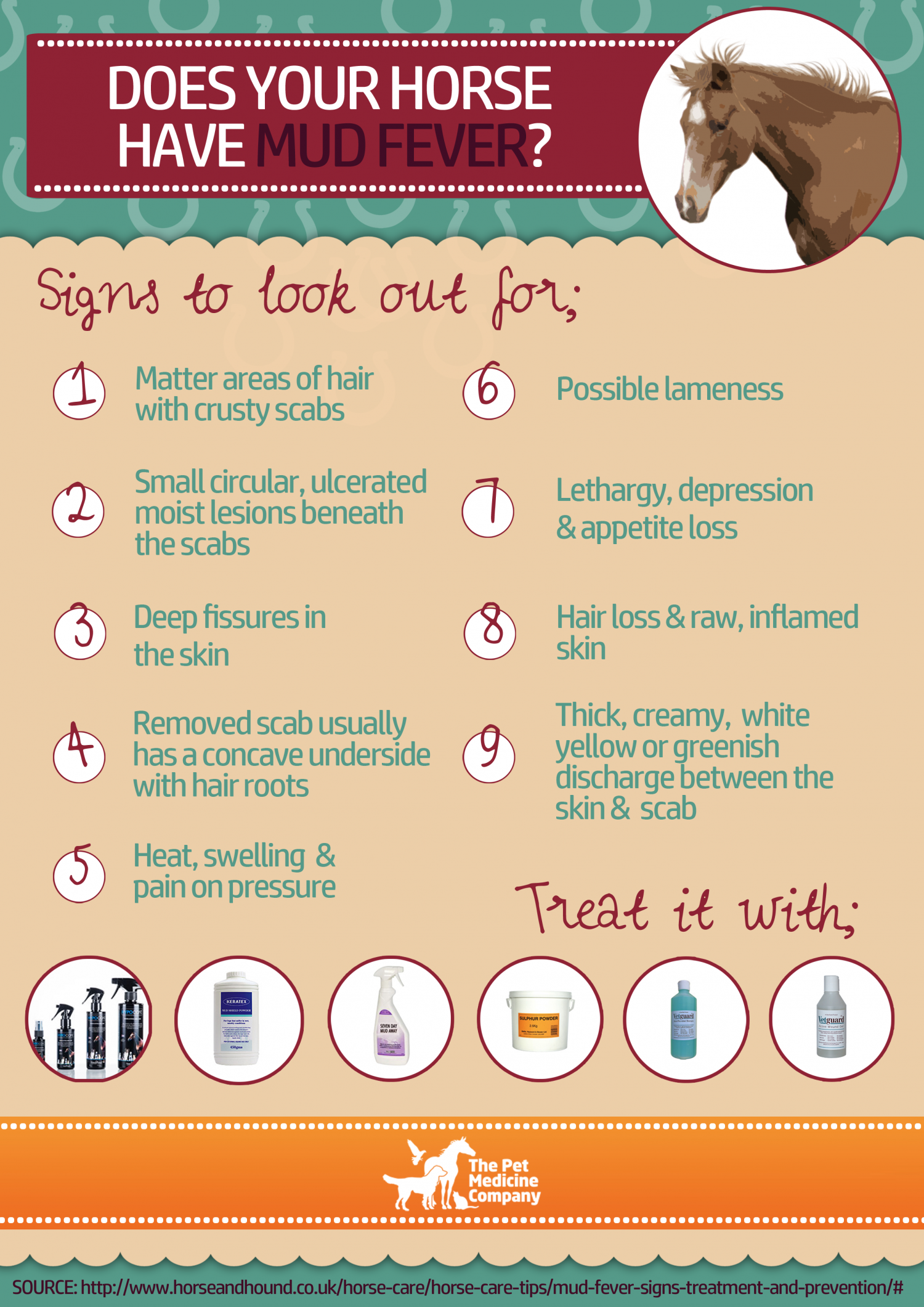 Does your Horse have Mud Fever? Infographic