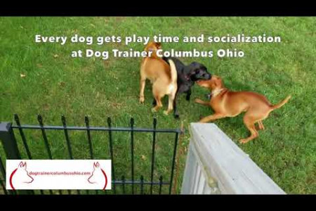 Dog Boarding with Columbus Ohio Dog Trainer Terry Cook Infographic