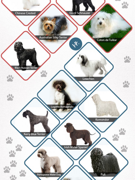 Dog Dander Infographic