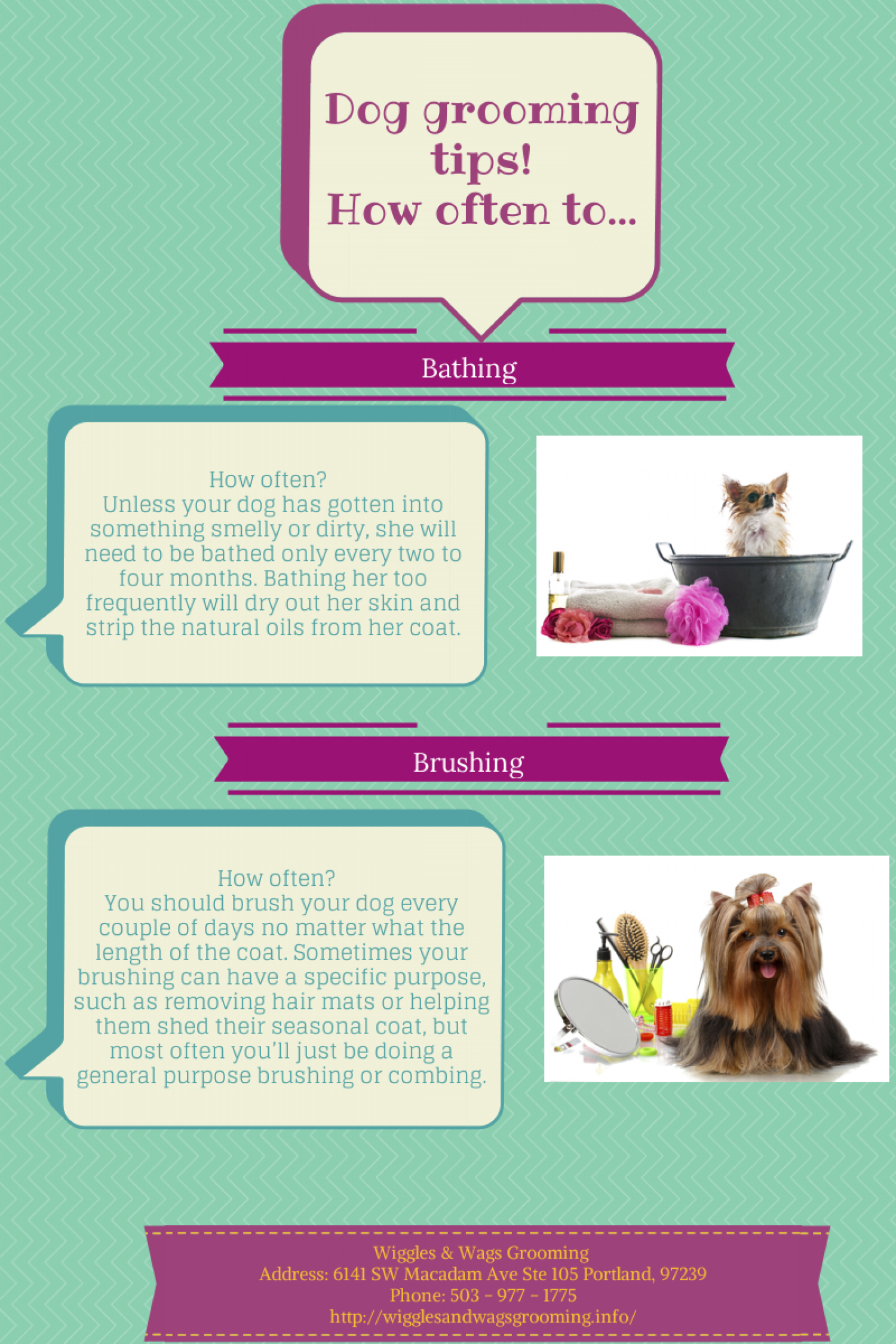 Dog Grooming Tips! Infographic
